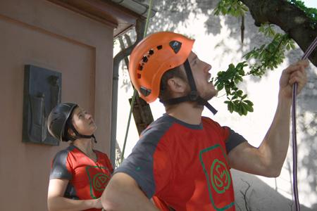 Kletterausrüstung Baum Fällen : Brezelfest 2015 ks baumpflege mainz baumfällung
